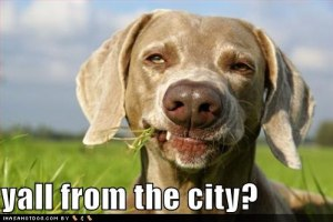 funny_dog_pictures_country_dog_asks_if_you_are_from_the_city