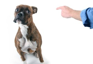 dog-training-boarding-breaks-bad-behaviors-600x417