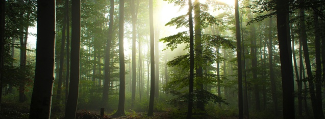 sunlight-through-trees-wallpaper-4